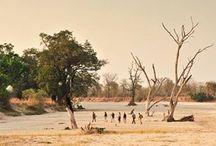 Luangwa, Zambia / Read more on the region our website - http://www.zambezitraveller.com/destination/luangwa/profile