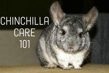 #Chinchilla