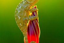 Life : Reptiles & Amphibians