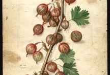 bær og blomster