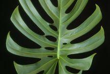 folhagens flora Bilulay