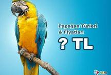 Papağan Hakkında Bilgiler / Papağanlar hakkında bilgilendirici yazılar...