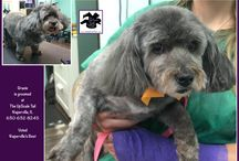 Senior Pet Grooming / We specialize in senior pet grooming at The UpScale Tail, Pet Grooming Salon, Naperville, IL www.theupscaletail.com