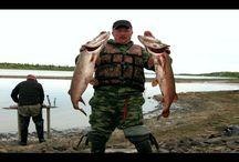 Рыбалка на Севере. Ловля трофейной щуки огромных окуней и…
