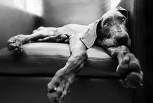 puppy love... / by Jen Miller
