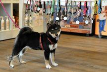Dogs In Pets - Zakka
