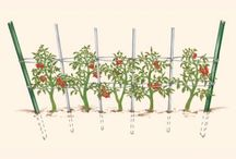 tomatoes hacks
