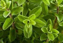 erbe e piante - proprietà