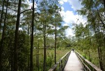 Florida Short Hikes