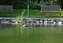 Natur Badesee Krone Au / Im Ihrem Sommerurlaub in Au im Bregenzerwald lädt dieser Ort voller Kraft und Ruhe zum Eintauchen und Erfrischen in kristallklarem Wasser ein.