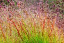 Planter og farver