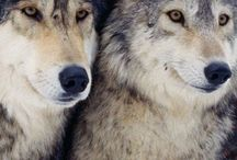 Wolf brothers