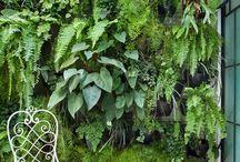 "Garden ""vertical"""