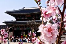 Favorimm Güney Koreee