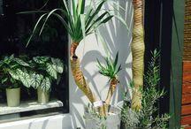 green interior / 毎年夏に八丈島などから一点物の観葉植物が入荷します。置き場所やディスプレイなど提案させて頂きます。
