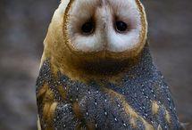Owls :) ❤️