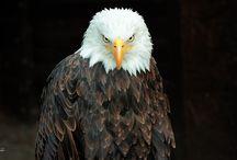 The Coolest Bird Photos!