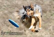 Dog's Life / <3