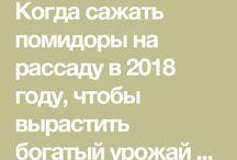 Помидоры 2018