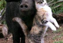 Гусь свинье товарищ