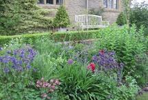 In the Garden / by Doreen