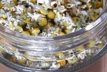 Chamomile flowers / This year I had an unexpected crop of chamomile flowers in my garden. I made the most of them by drying them, making them into tea, and using them in various other ways. You might also like my Daisies board!