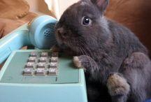 Conigli e animali che adoro
