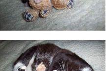 Sleepy kitty, purr, purrr, purrrr / Animals sleeping with stuffed animals, or hats, or just being cute