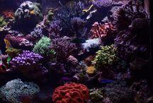 CoralCare; give your aquarium the light it deserves