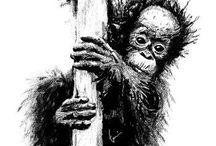 Orangutan Marketing design