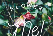 MAYO 2016: Flower me! / Mayo es el mes de las flores. ¿Cuántas veces no han oído decir eso? En este mes la primavera se siente más, todo se llena de color y alegría ¡Todo cobra vida!. No hay espacio que no se arregle con un buen ramo de flores, no hay cara a la que no se le dibuje una sonrisa con un buen ramillete, las hay de todas las formas, colores y olores, ¡Las flores son una dicha! y en Curuuba no lo podíamos dejar pasar, por eso este mes, ellas son las que nos inspiran.