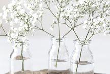Inspiration ~ Plantes & Fleurs
