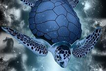 Turtle ⓛ ⓞ ⓥ ⓔ