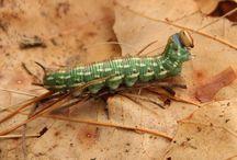 svět hmyzu