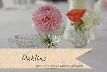   get to know your wedding flowers   / Advice about choosing different flowers at your wedding. Interviews with Karen Morgan, Passion for Flowers