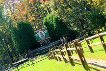 Gobbler's Knob / 1548 Woodland Ave Ext. Punxsutawney PA 15767 www.groundhog.org