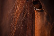 Pferdefotografie Ideen