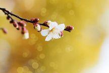 Sunteți nerăbdători să vină primăvara? / Primăvara