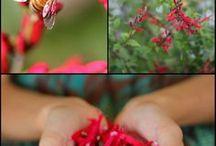 edible flowers etc