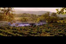 Wine and the movie or tv series./Wijn en de film of tv series / The subject and direct object or wine in a feature film or tv series./Het onderwerp en of lijdend voorwerp wijn in een speelfilm of tv series