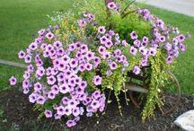 záhraha / milujem kvety