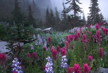 Wildflowers of North America / Wildflowers, both introduced and resident, of North America, captured in the wild.