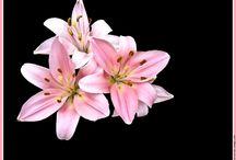 tatouages fleurs de lys