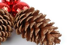 scents..pine cones