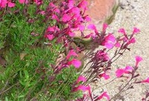 Low Maintenance Sun Plants for North Texas