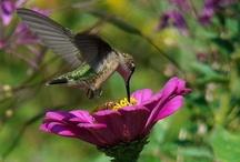 Hummingbirds / by Beverly Stuart Rodigo