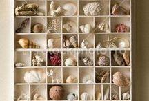 conchas e mar no lar...