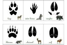 grand jeu animaux