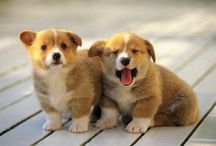For the love of animals... / When you need to smile, just look at these cute little faces.