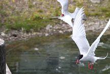 Iceland Wildlife / Nelle terre selvagge.. della Terra incompiuta